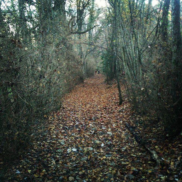 Promenade d'automne en famille par les chemins de traverse. #automne2017 #fall #autumn #mountainlife #montagnes