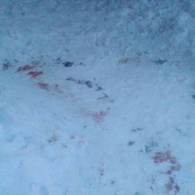 Hier, lors de ma rando, je suis tombé sur une scène de crime.Yesterday on my walk, I found a crime scene.#massifchartreuse #mountains #montagnes